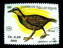 Ένα γραμματόσημο που τυπώνεται στη Νικαράγουα παρουσιάζει μια εικόνα του νότιου πουλιού Gallirallus στοκ εικόνες με δικαίωμα ελεύθερης χρήσης