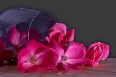 Ένα γυαλί κρασιού τοποθετεί αιχμή και απελευθερώνει σε μια λακκούβα των ρόδινων τριαντάφυλλων στοκ εικόνες