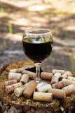 Ένα γυαλί με ένα κόκκινο κρασί και το κρασί βουλώνει σε ένα κολόβωμα σε ένα υπόβαθρο ενός θερινού δάσους Στοκ Φωτογραφίες