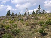 Ένα δάσος μέσω του οποίου η θύελλα πέρασε Στοκ φωτογραφία με δικαίωμα ελεύθερης χρήσης