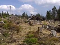 Ένα δάσος μέσω του οποίου η θύελλα πέρασε Στοκ Εικόνες