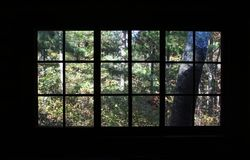 Ένα δάσος σε ένα παράθυρο Στοκ Φωτογραφίες