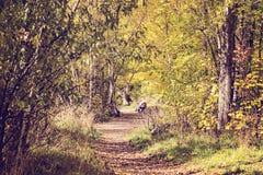 Ένα δάσος των φύλλων φθινοπώρου σε Arrowtown, Νέα Ζηλανδία Στοκ Φωτογραφίες
