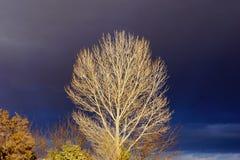 Ένα δέντρο ενάντια στο σκοτεινό θυελλώδη ουρανό στοκ φωτογραφία με δικαίωμα ελεύθερης χρήσης
