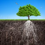 Ένα δέντρο και ένα χώμα με τις ρίζες και την τρισδιάστατη απεικόνιση χλόης ελεύθερη απεικόνιση δικαιώματος