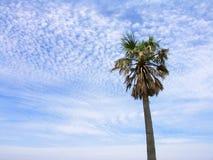 ένα δέντρο ουρανού Στοκ φωτογραφία με δικαίωμα ελεύθερης χρήσης