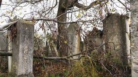 Ένα δέντρο πεσμένος στους τάφους ενός εγκαταλειμμένου παλαιού εβραϊκού νεκροταφείου απόθεμα βίντεο