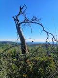 Ένα δέντρο που περιβάλλεται μόνο από τις εγκαταστάσεις στοκ φωτογραφίες