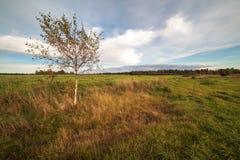 Ένα δέντρο σε ένα πλάγιο πεδίο φθινοπώρου Στοκ Φωτογραφίες