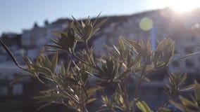 Ένα δέντρο στο ηλιοβασίλεμα που ταλαντεύεται στον αέρα ενάντια στη θάλασσα και την πόλη φιλμ μικρού μήκους