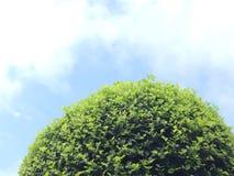 Ένα δέντρο στο μεγάλο ουρανό Στοκ φωτογραφία με δικαίωμα ελεύθερης χρήσης