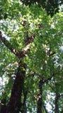 Ένα δέντρο Στοκ Φωτογραφίες