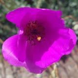 Ένα δασικό λουλούδι Στοκ Φωτογραφία