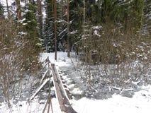 Ένα δασικό ρεύμα Στοκ φωτογραφία με δικαίωμα ελεύθερης χρήσης