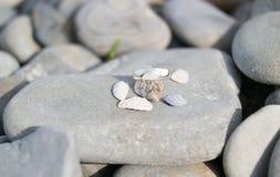 Ένα δαχτυλίδι των χαλικιών και των μικρών παραθυρόφυλλων κοχυλιών σε μια μεγάλη πέτρα Στοκ Εικόνες