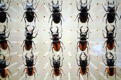 Ένα δείγμα εντόμων από το μουσείο της Σαγκάη της φύσης Στοκ εικόνες με δικαίωμα ελεύθερης χρήσης