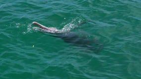Ένα δελφίνι που κολυμπά ελεύθερα απόθεμα βίντεο