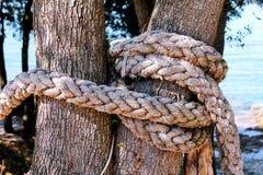Ένα δεμένο σχοινί σε ένα μεγάλο δέντρο Στοκ φωτογραφία με δικαίωμα ελεύθερης χρήσης