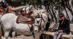Ένα διάσημο άσπρο άλογο από το νότο της Γαλλίας στοκ εικόνα