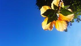 Ένα ελάχιστο κίτρινο καλοκαίρι λουλουδιών στοκ φωτογραφία με δικαίωμα ελεύθερης χρήσης