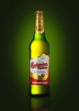 Ένα ενιαίο μπουκάλι της Budweiser Στοκ εικόνες με δικαίωμα ελεύθερης χρήσης
