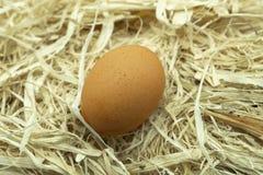 Ένα ενιαίο φρέσκο αυγό από μόνο του σε μια κλινοστρωμνή του φρέσκου αχύρου στοκ εικόνες
