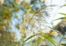 Ένα ενιαίο φύλλο ενός λεπτού άσπρου φυτού στο φως της ημέρας φύσης μπροστά από τα φύλλα δέντρων στοκ εικόνες