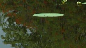 Ένα ενιαίο φύλλο στο νερό φιλμ μικρού μήκους