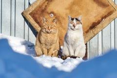 Ένα ζευγάρι των άστεγων γατών bask στο χειμερινό ήλιο στοκ εικόνες με δικαίωμα ελεύθερης χρήσης