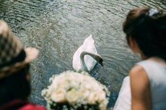 Ένα ζευγάρι των newlyweds με μια ανθοδέσμη των άσπρων τριαντάφυλλων κάθεται κοντά στη λίμνη Ο Κύκνος κολυμπά Στοκ φωτογραφία με δικαίωμα ελεύθερης χρήσης