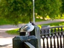 Ένα ζεύγος ερωτευμένο Στοκ Εικόνα