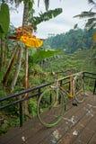 Ένα ζωηρόχρωμο ποδήλατο μπροστά από τους τομείς ρυζιού του πεζουλιού Tegalalang στοκ εικόνες