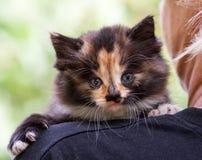Ένα ζωηρόχρωμο χνουδωτό γατάκι στον ώμο ενός ξανθού στοκ φωτογραφίες με δικαίωμα ελεύθερης χρήσης