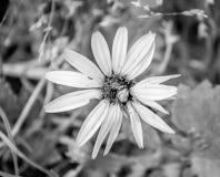 Ένα ζωύφιο πέρα από ένα κίτρινο λουλούδι στοκ φωτογραφίες