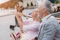 Ένα ηλικιωμένο ζεύγος στηρίζεται τη συνεδρίαση σε έναν πάγκο στο τετράγωνο Μια γυναίκα έχει μια αρκετά λίγη συνεδρίαση σκυλιών σε Στοκ φωτογραφία με δικαίωμα ελεύθερης χρήσης