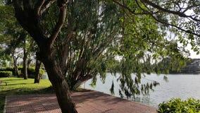 Ένα ηλιόλουστο απόγευμα σε ένα πάρκο Στοκ φωτογραφία με δικαίωμα ελεύθερης χρήσης