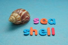 Ένα θαλασσινό κοχύλι με το κοχύλι θάλασσας λέξης Στοκ φωτογραφία με δικαίωμα ελεύθερης χρήσης