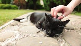 Ένα θηλυκό χέρι χαϊδεύει μια μαύρη γάτα ύπνου στον κήπο απόθεμα βίντεο