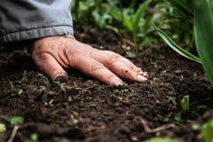 Ένα θηλυκό παλαιό χέρι στην χώμα-γη Κινηματογράφηση σε πρώτο πλάνο Η έννοια παλαιού ηλικία-yo-γερνά Στοκ φωτογραφία με δικαίωμα ελεύθερης χρήσης
