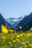 Ένα λιβάδι και ένα βουνό λουλουδιών Στοκ φωτογραφίες με δικαίωμα ελεύθερης χρήσης