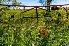 Ένα λιβάδι με τα στρογγυλά δέματα και το φρέσκο Τέξας Wildflowers σανού στοκ εικόνα