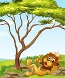 Ένα λιοντάρι βασιλιάδων που ξαπλώνει κοντά στο δέντρο ελεύθερη απεικόνιση δικαιώματος