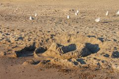 Ένα κάστρο άμμου που έχει καταστραφεί εν μέρει από τα κύματα σε μια εγκαταλειμμένη παραλία με τα μπεκατσίνια που τρέχει γύρω στοκ εικόνες με δικαίωμα ελεύθερης χρήσης