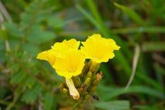 ένα κίτρινο λουλούδι Στοκ Εικόνα