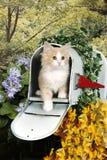 Ένα κίτρινο τιγρέ γατάκι σε μια ταχυδρομική θυρίδα Στοκ Εικόνα