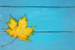 Ένα κίτρινο φύλλο σε ένα ανοικτό μπλε υπόβαθρο στοκ εικόνα με δικαίωμα ελεύθερης χρήσης