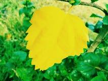 Ένα κίτρινο φύλλο Στοκ εικόνα με δικαίωμα ελεύθερης χρήσης