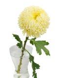 Ένα κίτρινο mum Στοκ εικόνες με δικαίωμα ελεύθερης χρήσης