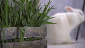 Ένα καλάθι της πράσινης χλόης που βρίσκεται σε ένα πάτωμα με ένα κουνέλι απόθεμα βίντεο