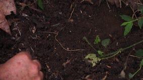 Ένα καλάθι turmeric των ριζωμάτων φιλμ μικρού μήκους